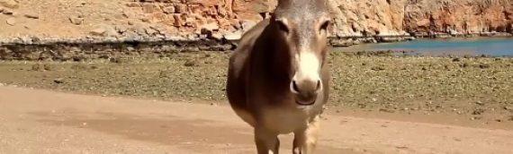 6.bioteeny Kinderstunde – Der Esel, ein besonderes Tier