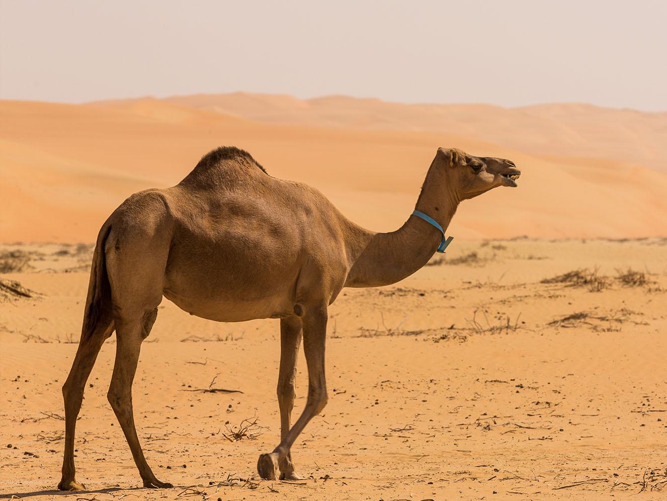 Das Talent in der Wüste