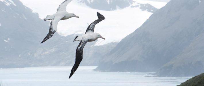 Albatros-Test