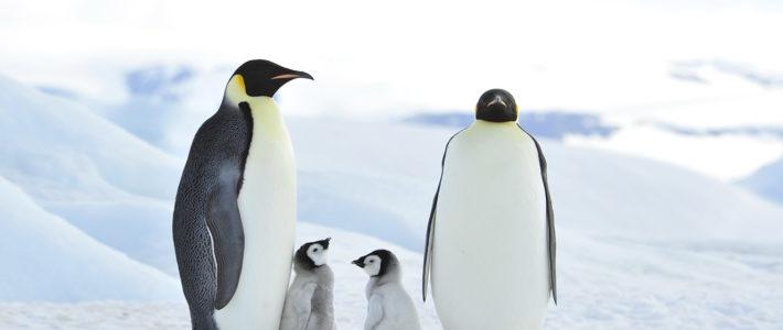 Auf kalten Füßen durch die Antarktis